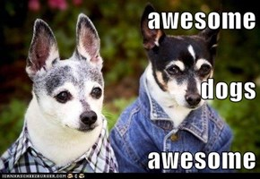 awesome dogs awesome