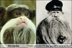 this monkey Totally Looks Like this guy with a cat in his beard