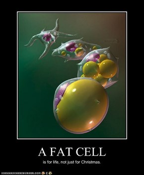 A FAT CELL