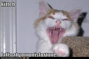 kitteh  laffs at your misfortune