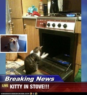 Breaking News - KITTY IN STOVE!!!