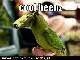 cool beenz