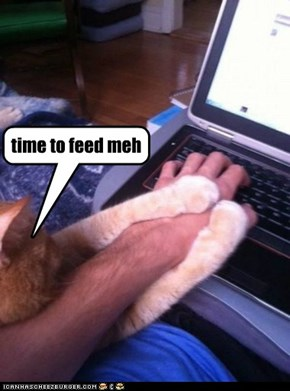 time to feed meh