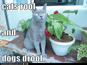 cats rool and dogs drool