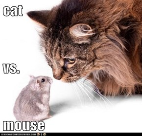 cat vs. mouse
