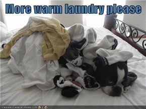 More warm laundry please
