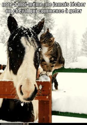 note à moi-même : ne jamais lécher un cheval qui commence à geler