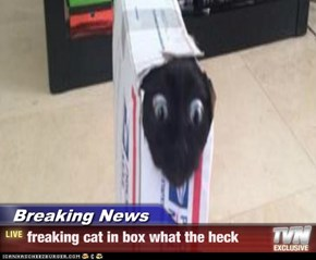 Breaking News - freaking cat in box what the heck