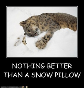 NOTHING BETTER THAN A SNOW PILLOW