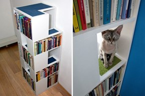 Kitty Shelves WIN