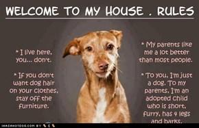 Dog Live Here