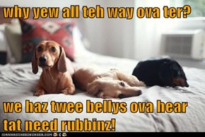 why yew all teh way ova ter?  we haz twee bellys ova hear tat need rubbinz!