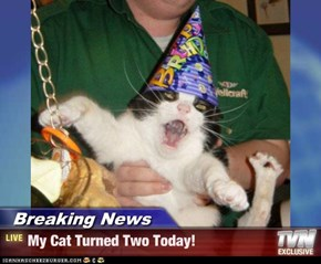 Breaking News - My Cat Turned Two Today!
