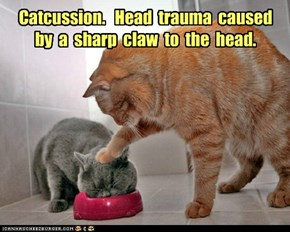 Catcussion.   Head  trauma  caused  by  a  sharp  claw  to  the  head.