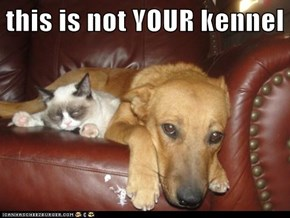 this is not YOUR kennel