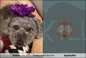 Dexter Totally Looks Like Spookyfish