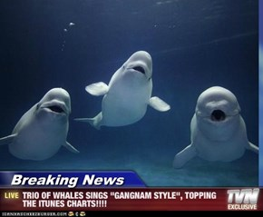 "Breaking News - TRIO OF WHALES SINGS ""GANGNAM STYLE"", TOPPING THE ITUNES CHARTS!!!!"