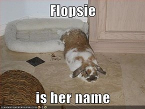 Flopsie  is her name