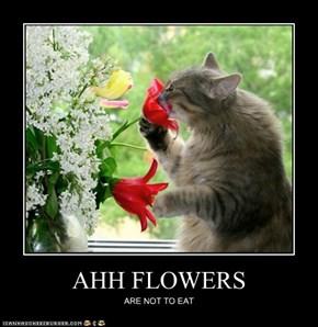 AHH FLOWERS