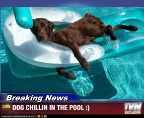 Breaking News - DOG CHILLIN IN THE POOL :)
