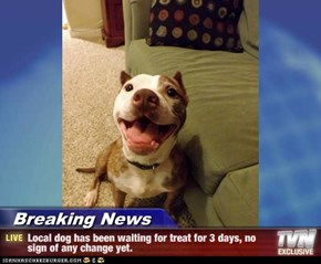 Breaking News - Local dog has been waiting for treat for 3 days, no sign of any change yet.