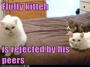 Fluffy kitteh  is rejected by his peers