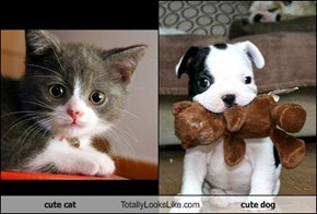 cute cat Totally Looks Like cute dog