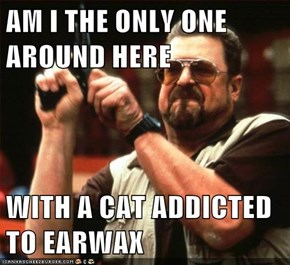 AM I THE ONLY ONE AROUND HERE  WITH A CAT ADDICTED TO EARWAX
