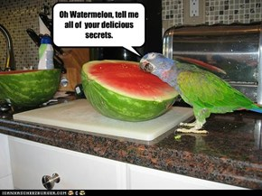 Oh Watermelon