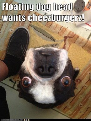 Floating dog head wants cheezburgerz!