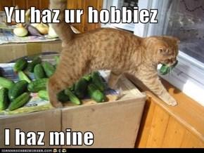 Yu haz ur hobbiez  I haz mine