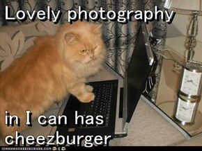 Lovely photography    in I can has cheezburger