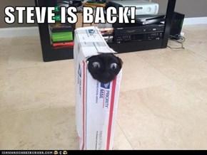 STEVE IS BACK!