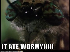 IT ATE WORMY!!!!!