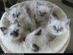 Itty Bitty Kitty Circle Committee