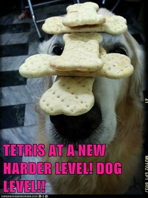 TETRIS AT A NEW HARDER LEVEL! DOG LEVEL!!