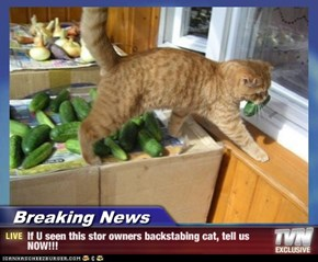 Breaking News - If U seen this stor owners backstabing cat, tell us NOW!!!