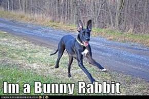 Im a Bunny Rabbit