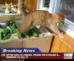 Breaking News - KITTEN GOES TO FEDERAL PRISON FOR STEALING A... WHADEVA YA CALL IT