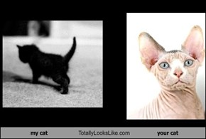 my cat Totally Looks Like your cat