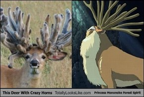 This Deer With Crazy Horns Totally Looks Like Princess Mononoke Forest Spirit