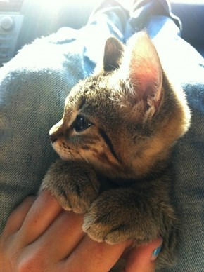 Cyoot Kitteh of teh Day: PAWSES