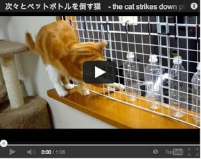 Around the Interwebz: The Naughtiest Kitty You Will See all Day!