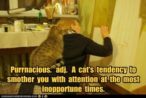 Purrnacious.   adj.   A  cat's  tendency  to  smother  you  with  attention  at  the  most inopportune  times.
