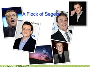 A Flock of Segels