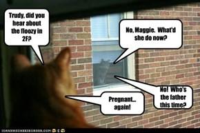 Cats:  Masters of Gossip.