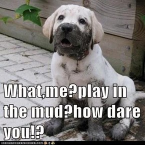 What,me?play in the mud?how dare you!?