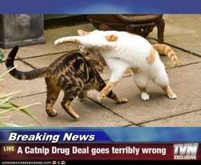 Breaking News - A Catnip Drug Deal goes terribly wrong