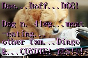Doe...Doff...DOG! Dog n. 4leg...meat-eating... other fam...Dingo &...COYOTE! YES!!!