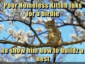Poor Homeless Kitteh luks for a birdie  to show him how to buildz a nest
